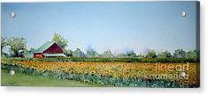Field Of Sunshine Acrylic Print