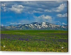 Acrylic Print featuring the photograph Field Of Wildflowers by Don Schwartz