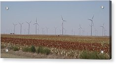 Acrylic Print featuring the photograph Field Of Wind by Fortunate Findings Shirley Dickerson