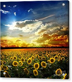 Field With Sunflowers Acrylic Print by Boon Mee