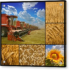 Fields And Grain Collage Acrylic Print by Boon Mee