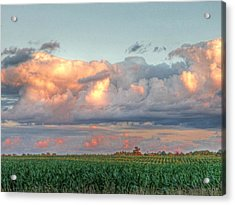 Fields Of Corn Acrylic Print by Heather Allen