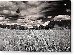 Fields Of Gold And Clouds Acrylic Print
