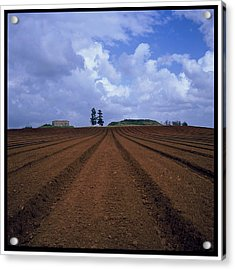 Fields Of Hod Hasharon Acrylic Print by Dubi Roman