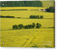 Fields Of Yellow Acrylic Print by Ann Fellows