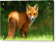 Fiery Fox Acrylic Print by Christina Rollo