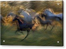 Fiery Gallop Acrylic Print by Milan Malovrh
