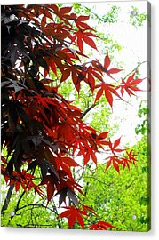 'fiery Maple' Acrylic Print