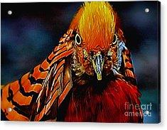 Fiery Pheasant Acrylic Print