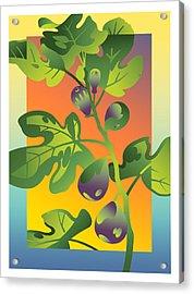 Fig Acrylic Print