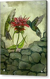 Fight Of The Hummingbirds Acrylic Print