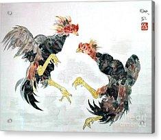 Fighting Chickens Acrylic Print
