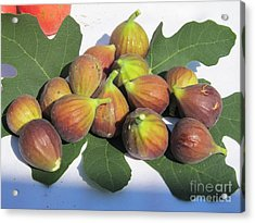 Acrylic Print featuring the photograph Figs First Harvest 2012 by Tina M Wenger
