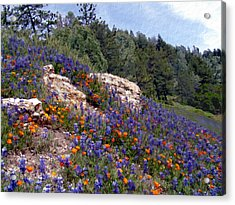 Figueroa Mountain Splendor Acrylic Print by Kurt Van Wagner