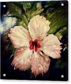 Acrylic Print featuring the photograph Fiji Magic by Paul Cutright