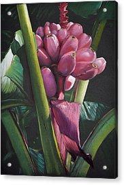 Fijian Bananas Acrylic Print