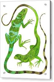 Fijian Iguanas Acrylic Print by Cindy Hitchcock