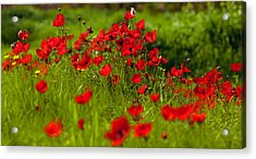 Acrylic Print featuring the photograph Filed Of Anemones by Uri Baruch