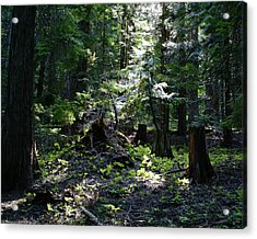 Acrylic Print featuring the photograph Filtered Sunlight Peace by Ben Upham III