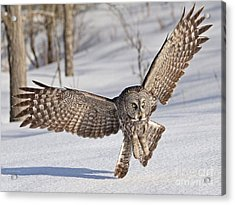 Final Approach Acrylic Print by Heather King