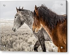 Acrylic Print featuring the photograph Finally Free by Yeates Photography