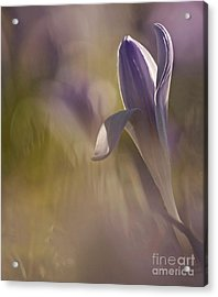 Finally  Spring Acrylic Print by Inge Riis McDonald