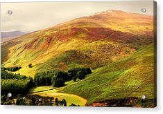 Find The Soul. Golden Hills Of Wicklow. Ireland Acrylic Print by Jenny Rainbow