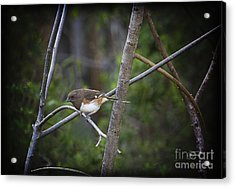 Finding A Mate Acrylic Print by Cris Hayes