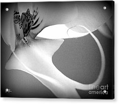 Fine Lines Black And White Acrylic Print