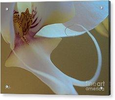 Fine Lines Acrylic Print by Geri Glavis