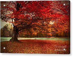 Finest Fall Acrylic Print by Hannes Cmarits