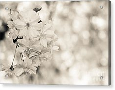 Finest Spring Time - Bw Acrylic Print by Hannes Cmarits