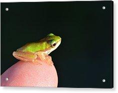 Finger Tip Baby Frog Acrylic Print