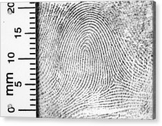 Fingerprint With Ruler For Measurement Acrylic Print by Living_images