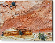 Fins In Zion Canyon Np Acrylic Print