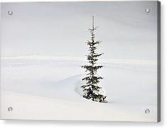 Fir Tree And Lots Of Snow In Winter Kleinwalsertal Austria Acrylic Print by Matthias Hauser