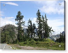 Fir Trees At Mount Baker Acrylic Print by Tom Janca