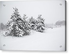 Fir Trees Covered By Snow Acrylic Print