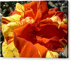 Fire Ball Acrylic Print by Anat Gerards