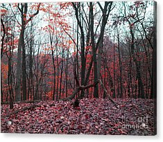 Fire In The Woodland Acrylic Print