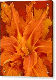 Fire Lily Acrylic Print