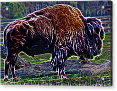 Fire Of A Bison  Acrylic Print
