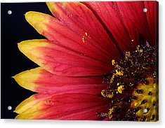 Acrylic Print featuring the photograph Fire Spokes by Paul Rebmann