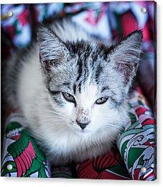 Acrylic Print featuring the photograph Firecracker Kitten by Zoe Ferrie