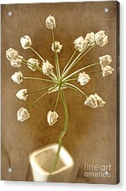 Firecracker Acrylic Print