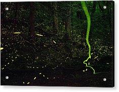 Fireflies Flash And Streak Acrylic Print