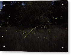 Firefly Traces On A Summer Night Acrylic Print