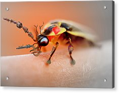 Acrylic Print featuring the photograph Firefly Warrior by Chris Fraser