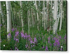 Acrylic Print featuring the photograph Fireweed And Aspen by Cascade Colors