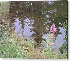 Fireweed And Salmon. Acrylic Print